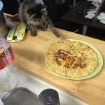 猫がフライドポテト食べた。大丈夫??
