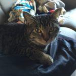 猫「ロミちゃん」だるまさんが転んだを失敗する