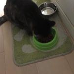 水道水を飲む猫。ロミちゃん蛇口?から出てるの飲めた