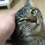 ノラから家猫「ロミちゃん」目次ページです♪