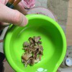 牛肉を食べる猫【猫のご飯】ロミちゃん牛カルビを食べたよー