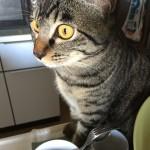 早くも花粉症になった自分、ウチの猫ロミちゃんは…