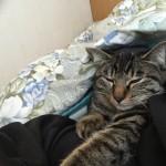 腕枕で寝る猫。ロミちゃん布団に入ってきた