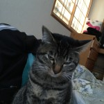 優しい猫ロミちゃんの気遣い
