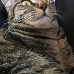猫が朝起こす…ウチのロミちゃんは??