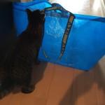 IKEAの袋が猫的にいいらしい。でも…