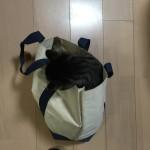 猫が袋に入る。ロミちゃんも大好きです