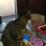 猫はシャボン玉も好き??洗い物の日課