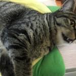 ウチの家猫ロミちゃんは夜中に運動会