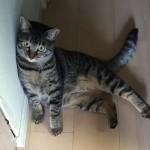 ウチの猫が朝のトイレラッシュを邪魔して困る