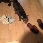 お出迎えから膝でまったりのウチの家猫^^