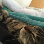 安眠の材料。ウチの猫ロミちゃんの寝顔と寝姿