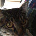 猫どアップ!ロミちゃん近いよ…