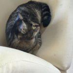 猫をキャットタワーで運動させるには…