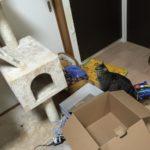 猫もキャットタワーから落ちる…