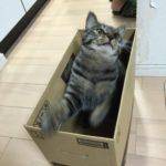 暑い中でも…元気な猫!
