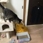 猫が誤飲したもの、いつ出てくるの??