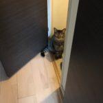 トイレ大好き猫。扉を開ければダッシュで飛び込む