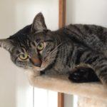 再び暑くなってきた中、ウチの猫ロミちゃんは…