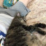 猫とエアコン生活