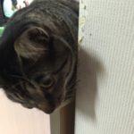 猫に魚。ロミちゃんサバを強奪!