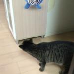 ポケモンゲットだぜ!うちの猫ロミちゃんも探すよ(笑)