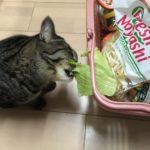 食べれるの?猫はスイカ大丈夫??
