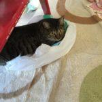 何でもおもちゃ。なぜかバックに飛び込んで遊ぶウチの猫