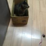 猫も1歳3ヵ月になれば体に合う箱を探すのも大変