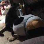 ウチの猫が夜中に紙袋をかじる…食べてる!?なんで~??