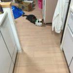猫は箱が好き!新しい箱を手に入れた