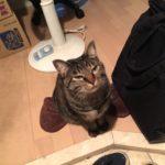 お見送りからお出迎え、ご飯も寝るのも一緒なうちの猫