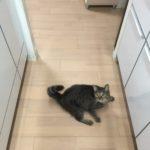 猫の鳴き声。ロミちゃんが何か訴えてる??