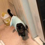 季節はもう冬。寒い!気温が低くなってからの猫の行動の変化