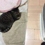 やっと怖がらなくなった!ウチの猫がファンヒーターに慣れたようです。