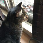 昼はベランダに出ないウチの猫。そういえば理由を考えた事なかったけど…