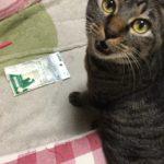 ウチの猫に「波型フィンガー歯ブラシ」使ってみた!…のか??