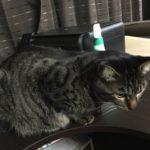 年末の大掃除?最初にパソコン周りから。猫の座る場所出来ました