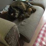 布団の中に潜る猫。息苦しくないのか?ちょっと心配…