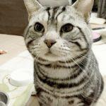 ペットロス症候群のその後。先代猫が亡くなって1年5ヶ月…克服は?