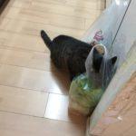 猫が白菜食べた!?生でよくかじるけど平気?大丈夫??