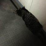 猫は狭いとこが好きだけど…それ、入れてないよ