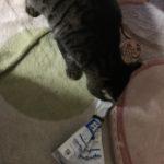 ウチの猫、ついに防御扉を突破する