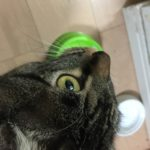 猫がご飯に砂をかけるしぐさ。カキカキするのは何故?いらない??