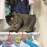 やんちゃなウチの猫…おてんば?綱渡り…!?