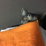 寒くてもウチの猫は元気!?日向ぼっこからイタずら、かくれんぼ!?