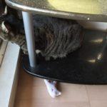 気温が上がると猫の寝床も変わる