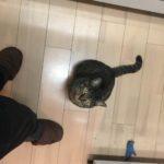 ずっと足元、料理が終わるまで見上げて待ってるウチの家猫