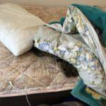 猫は夜型、昼まで布団で寝るウチの猫
