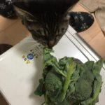 猫がブロッコリーの葉っぱを食べたがる!?あれ…?食べて大丈夫だっけ??